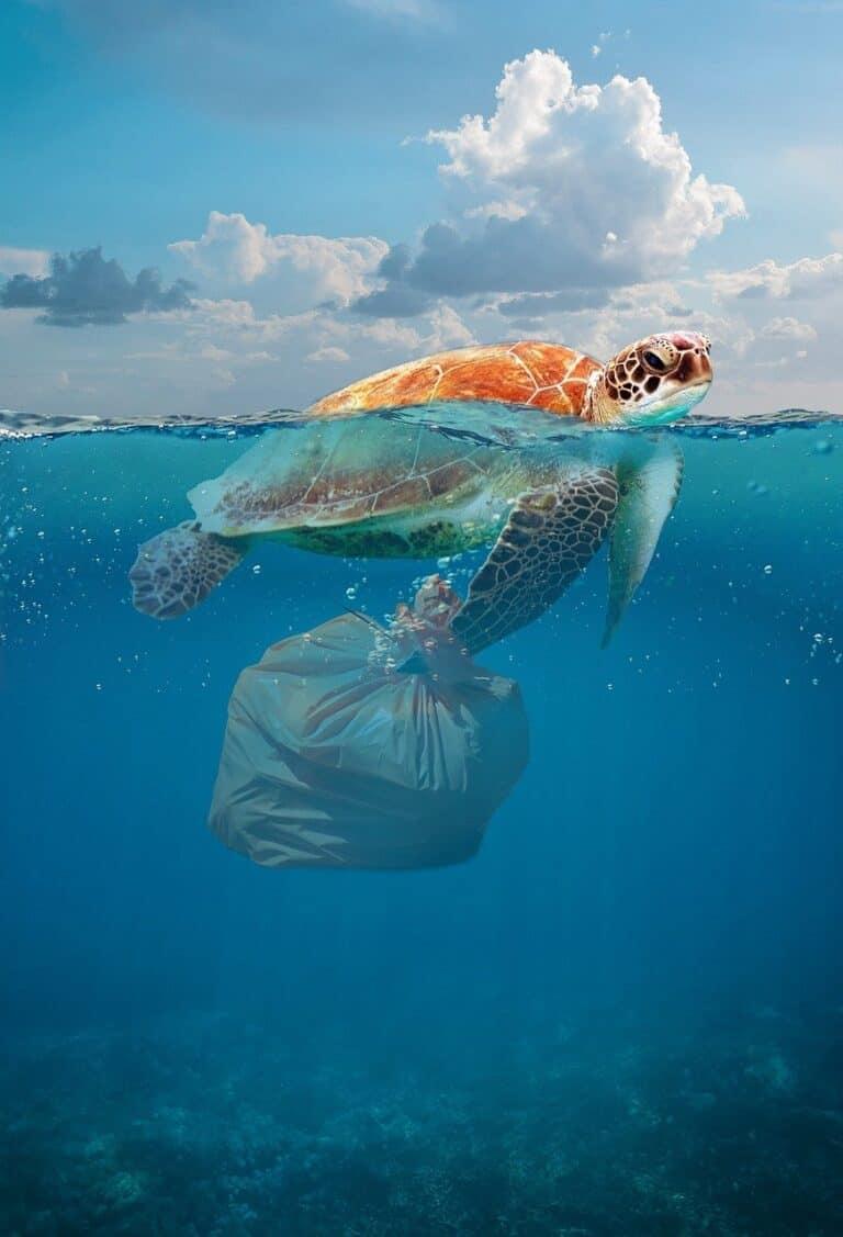 environmental, disaster, pollution