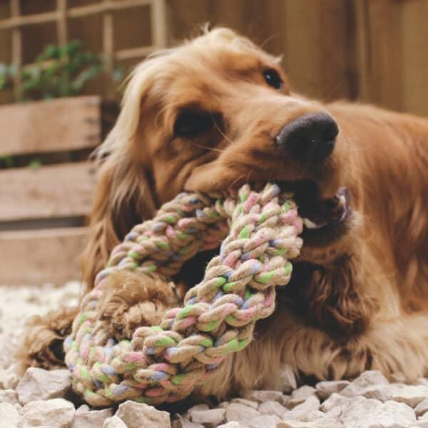hemp dog toy