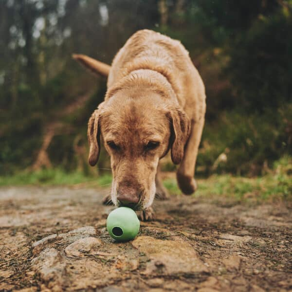 natural rubber toy