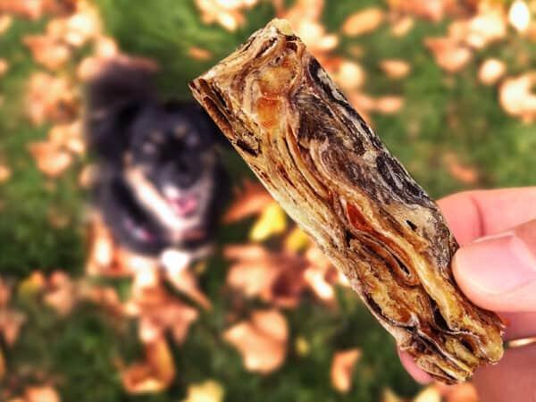 fish finger dog treats